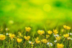 spring-clean-image